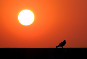 Bird and the Sunset